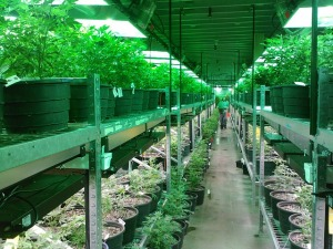 This is only a small grow taking place in Colorado. Imagine how much is being invested.
