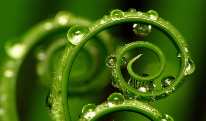Don't be Green With Envy – Diversify Your Brand's Color