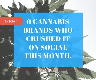 Six Cannabis Companies Who Crushed it on Social Media – October 2016